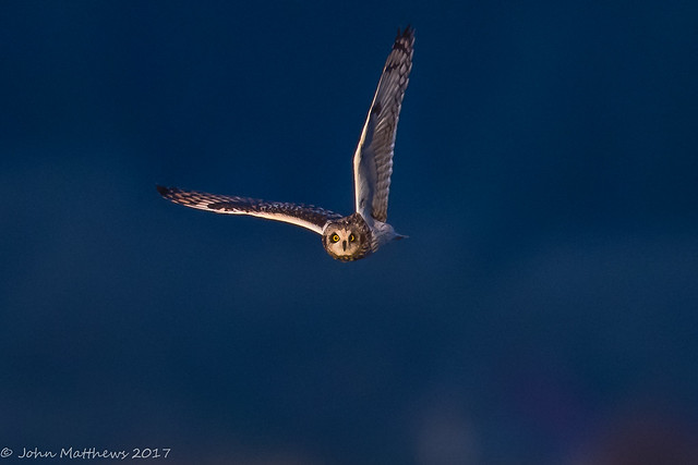 Short-eared Owl-6789.jpg, Canon EOS 7D MARK II, Canon EF 600mm f/4L IS