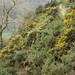 20170330-62_Narrow Path above Keldgate Slack