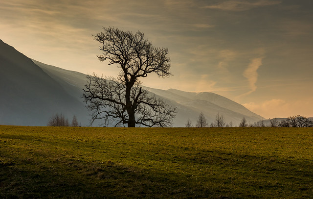 Lone Tree, Early Morning