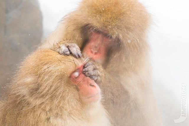 Snow Monkey   爽~, Canon EOS M5, Canon EF 70-200mm f/4L IS