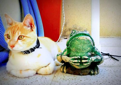 El gato y el sapo !!