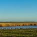 Farlington Marsh (1 of 1)