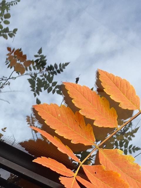Todos somos hojas, todos somos nubes