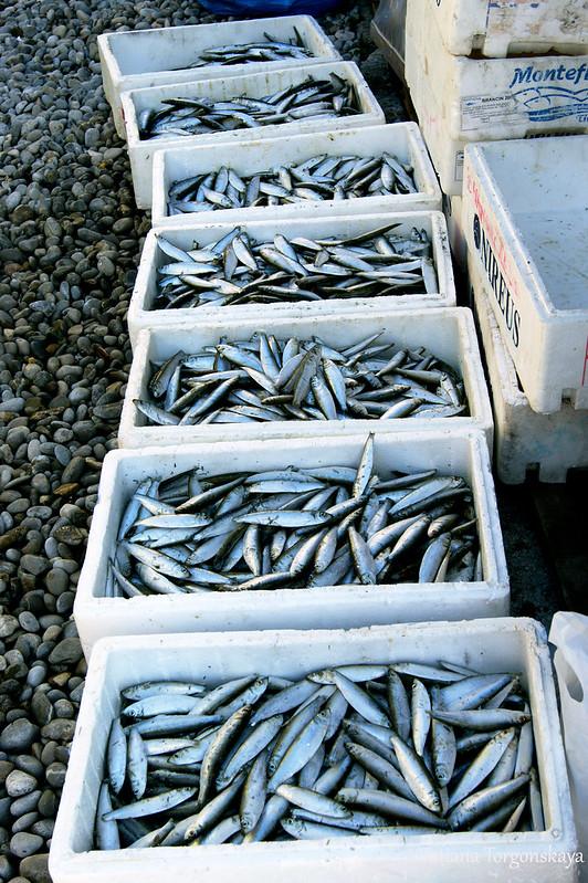 Ящики с сырой рыбой