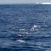 4. Peces voladores en Maldivas