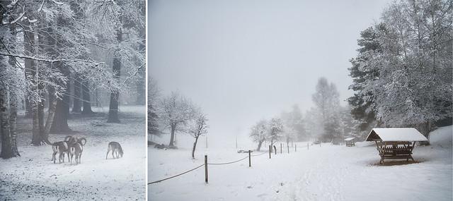 escenas en la nieve