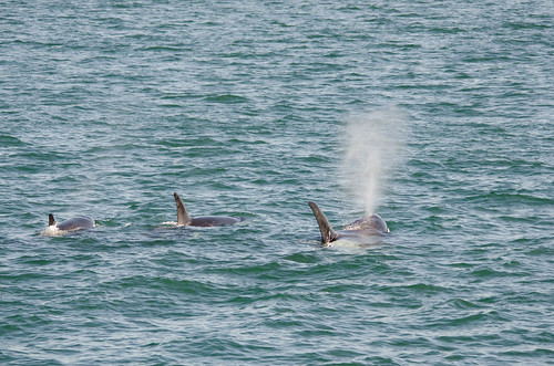 Whale Watching with Island Adventures-133