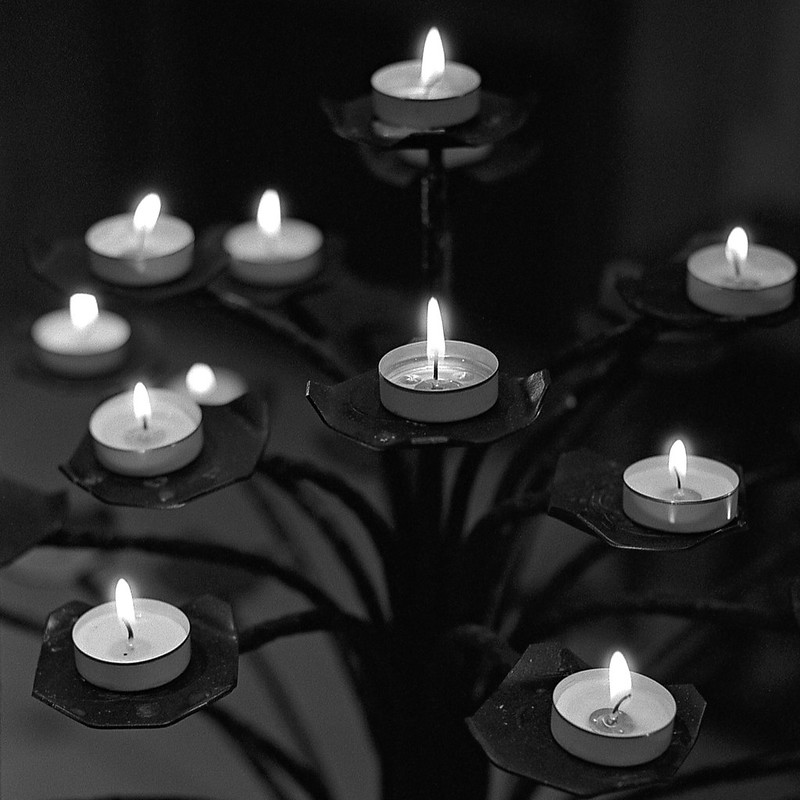 FILM - Candle Tree