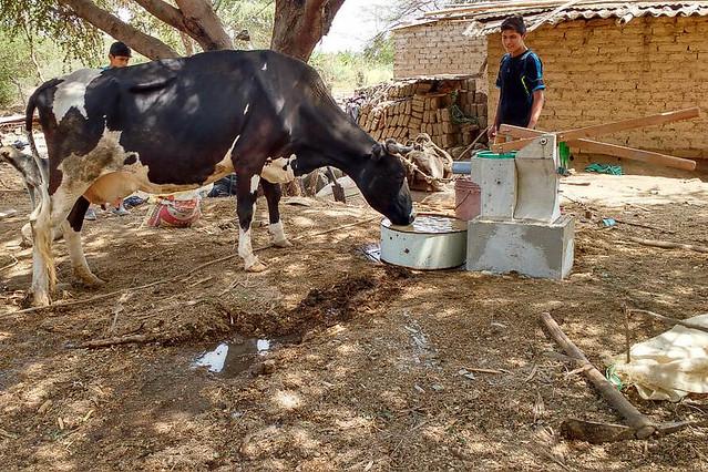 Wasser für Kühe