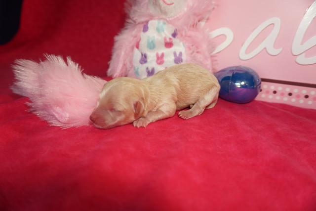 1 Annie (smallest) 4.8oz Just Born (1)