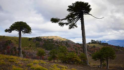 Cordillera de las  Raises