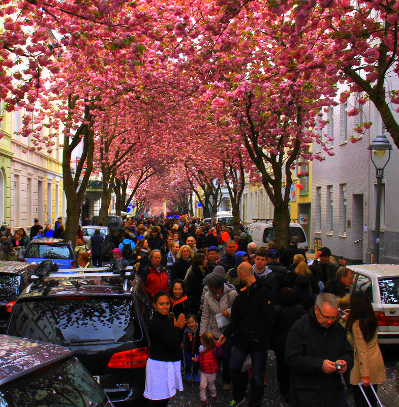 the famous pink tunnel of bonn heerstrasse