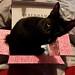 Cuddle is loving the Debenhams delivery box!
