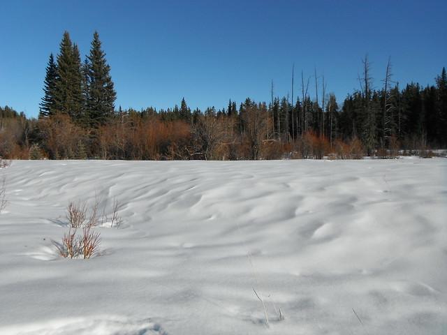 Alberta Bound Winter