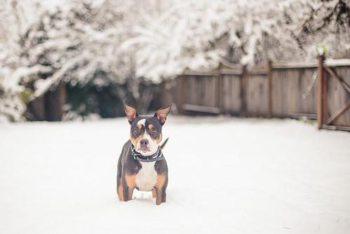 Snow-8432