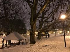 L'abris rustique et les vieux marronniers sous la neige