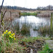 First signs of Spring on the marshes