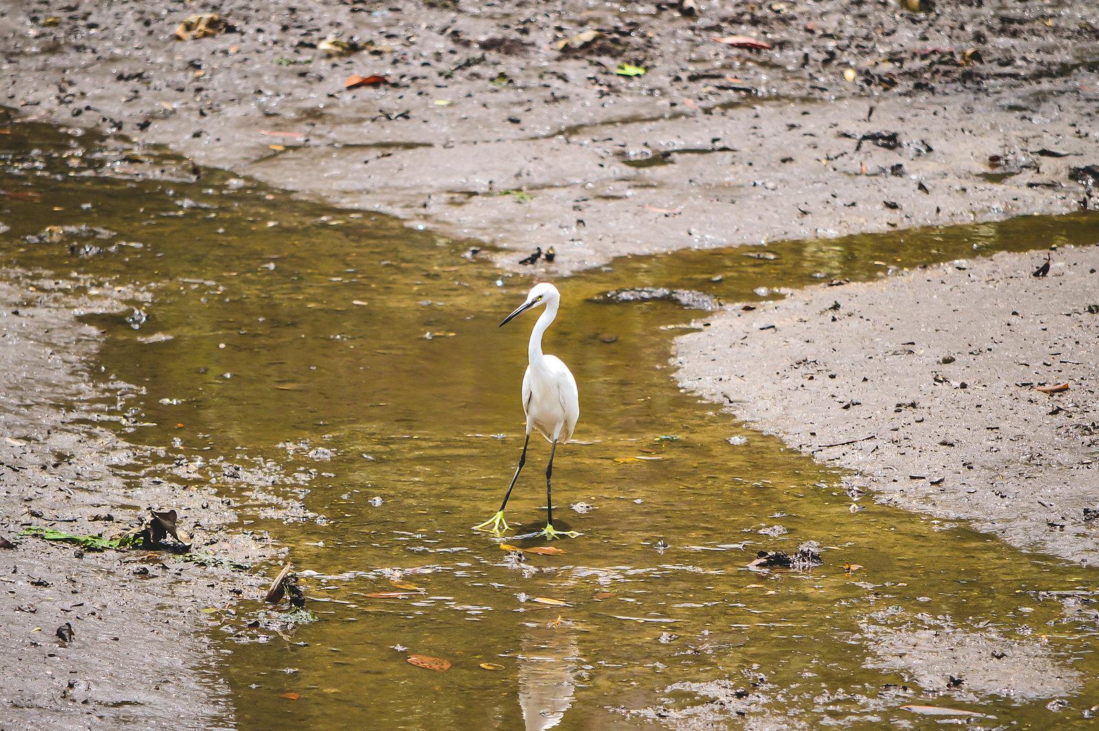 Sungei Buloh Wetland Reserve, Singapore 2018
