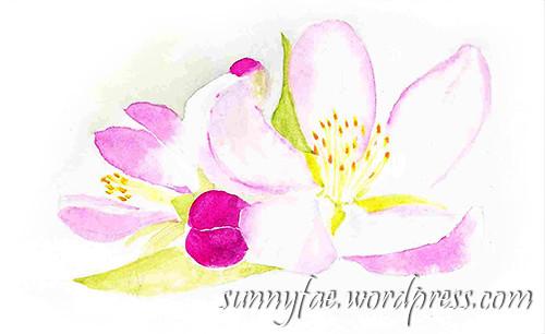 apple blossom sketch