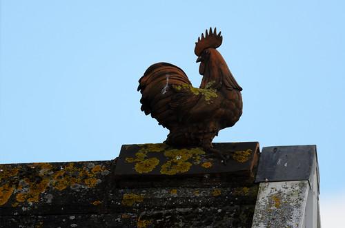 Lichen-covered cock