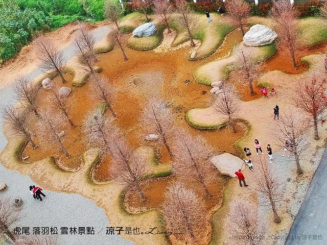 虎尾 落羽松 雲林景點 12
