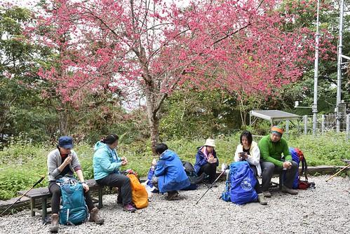 瓦拉米步道-佳心駐在所-櫻花