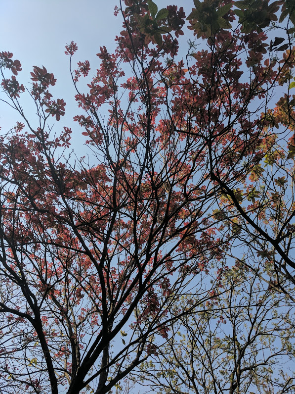 Spring in Delhi: Raj Ghat