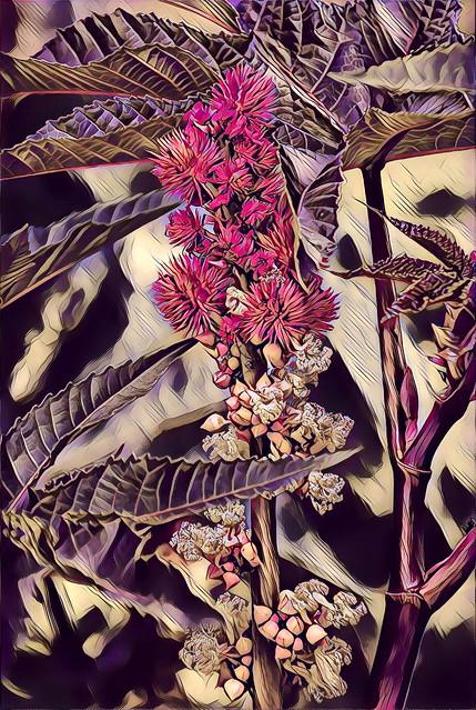 Toronto Ontario ~ Canada ~ Edwards Gardens ~ Botanical Garden ~  Dried out Flowers