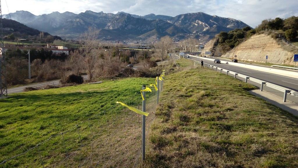 Llaços grocs a la C-16 entre Berga i Gironella
