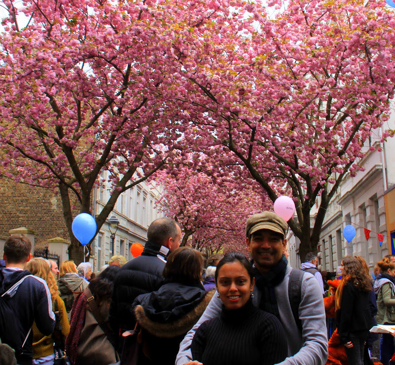 Tourists throng to bonn cherry blossom festival