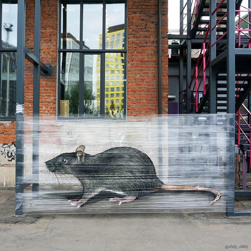 Evgeny Ches. Cellograffiti на фоне природы.