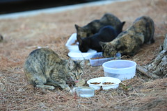 Cat's feeding