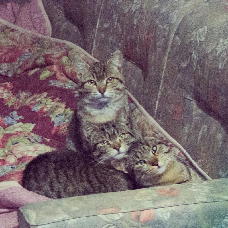 February 23rd, 2018 #kittens