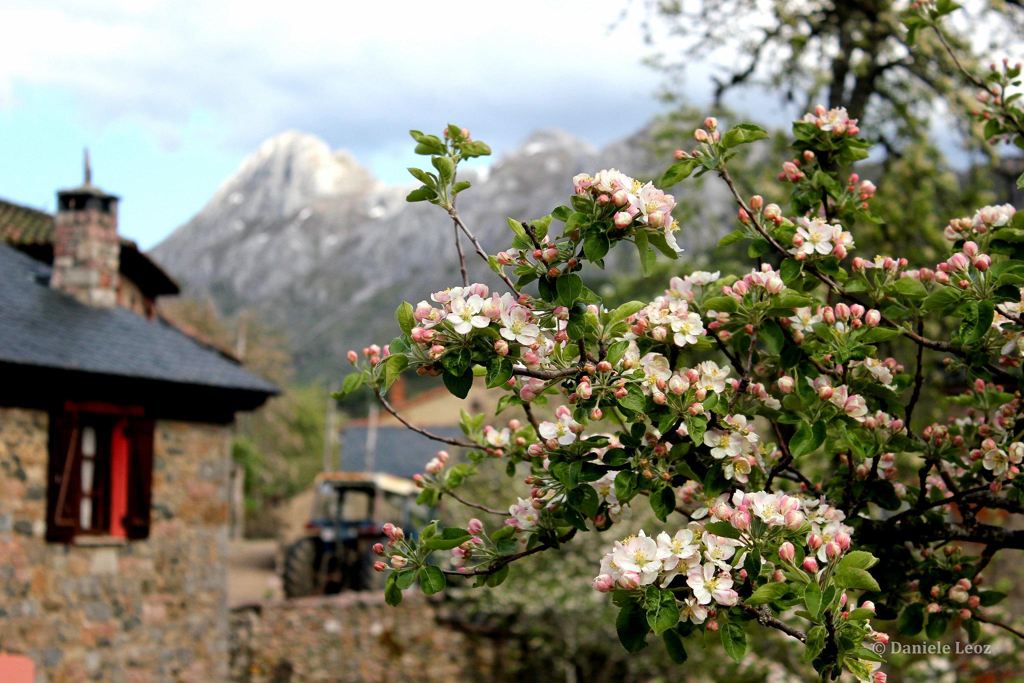 Redilluera - Montaña Leonesa (14)