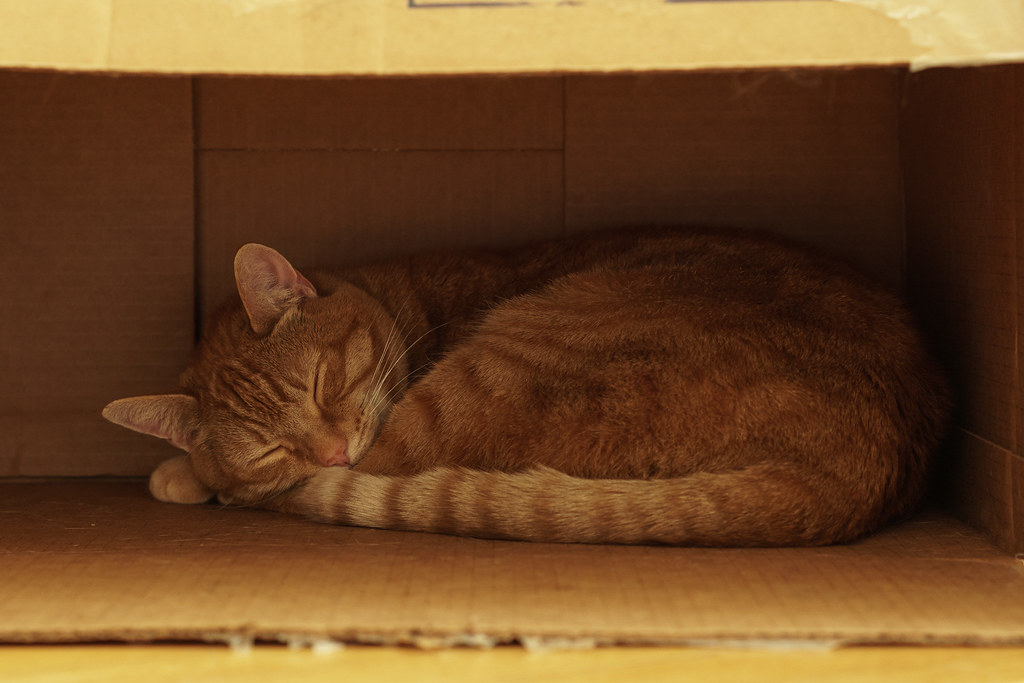Our orange tabby cat Sam sleeps in a cardboard box turned on its side