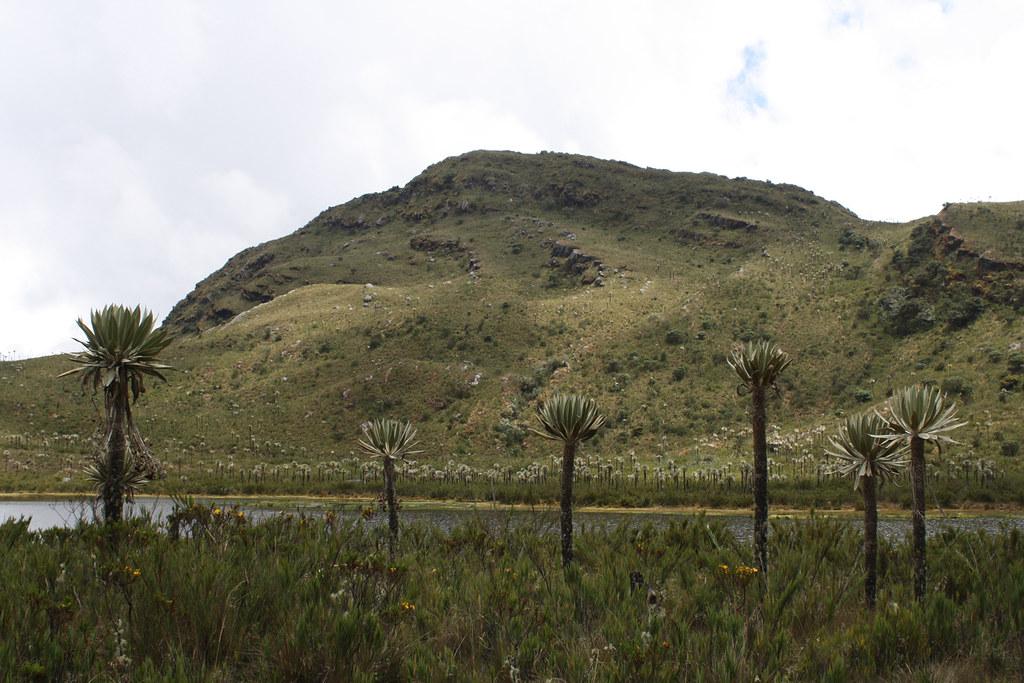Laguna-7