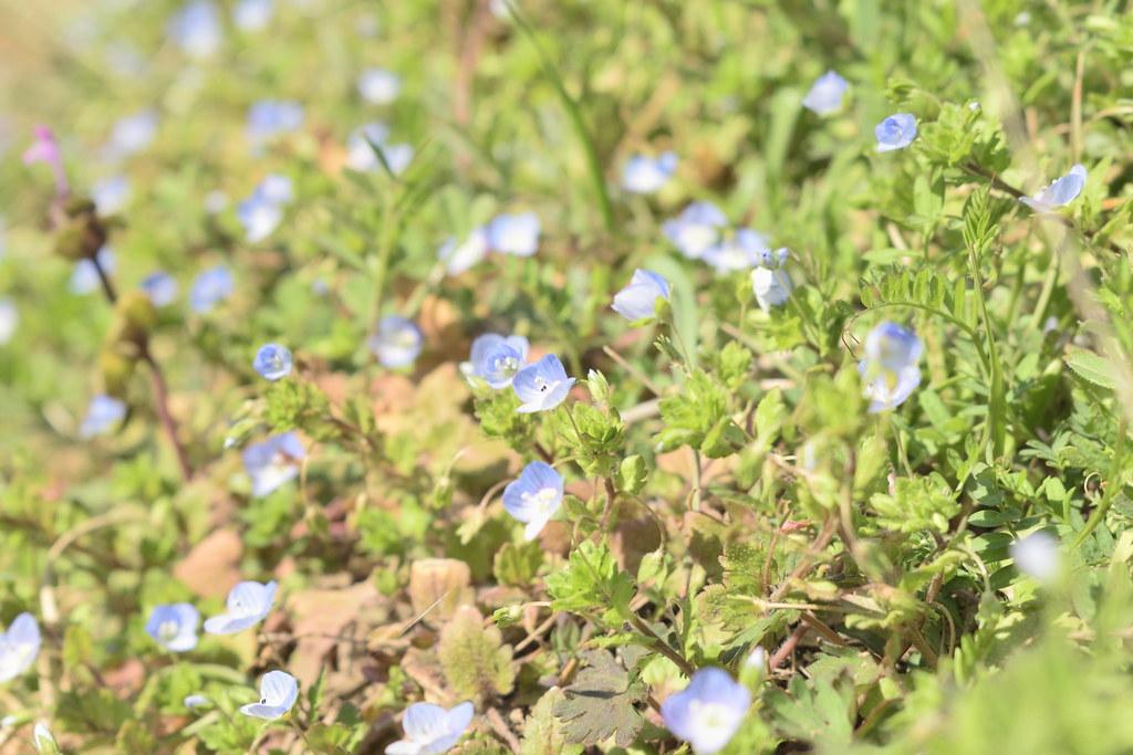 身近な春:Familiar spring