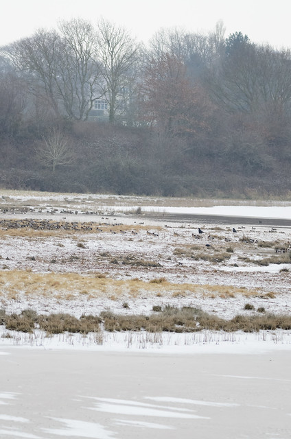 Snow and ice, RSPB Bowling Green