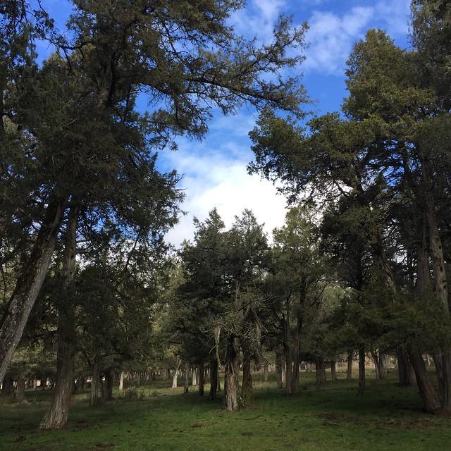 Sabinar de Calatañazor