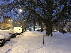 Vieux chêne et les voitures parquées sous la neige