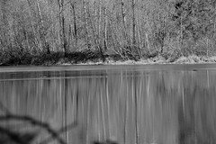 Reflection_8573