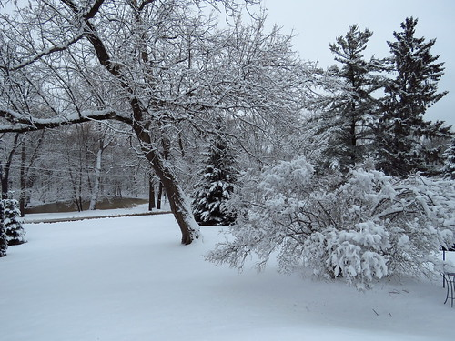 nature wisconsin muskego home frontyard winter snow trees pines