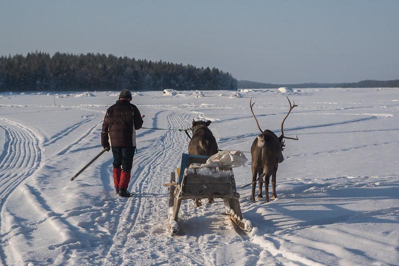 Reindeer sled and local Santa (Mikhail)