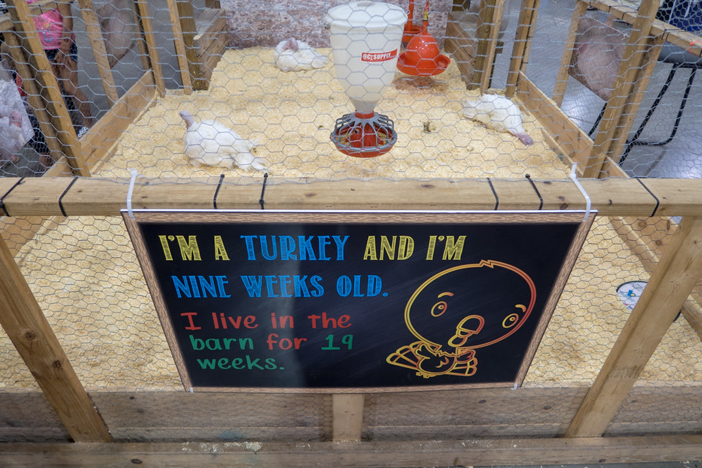 Sign describing baby turkey at Iowa State Fair