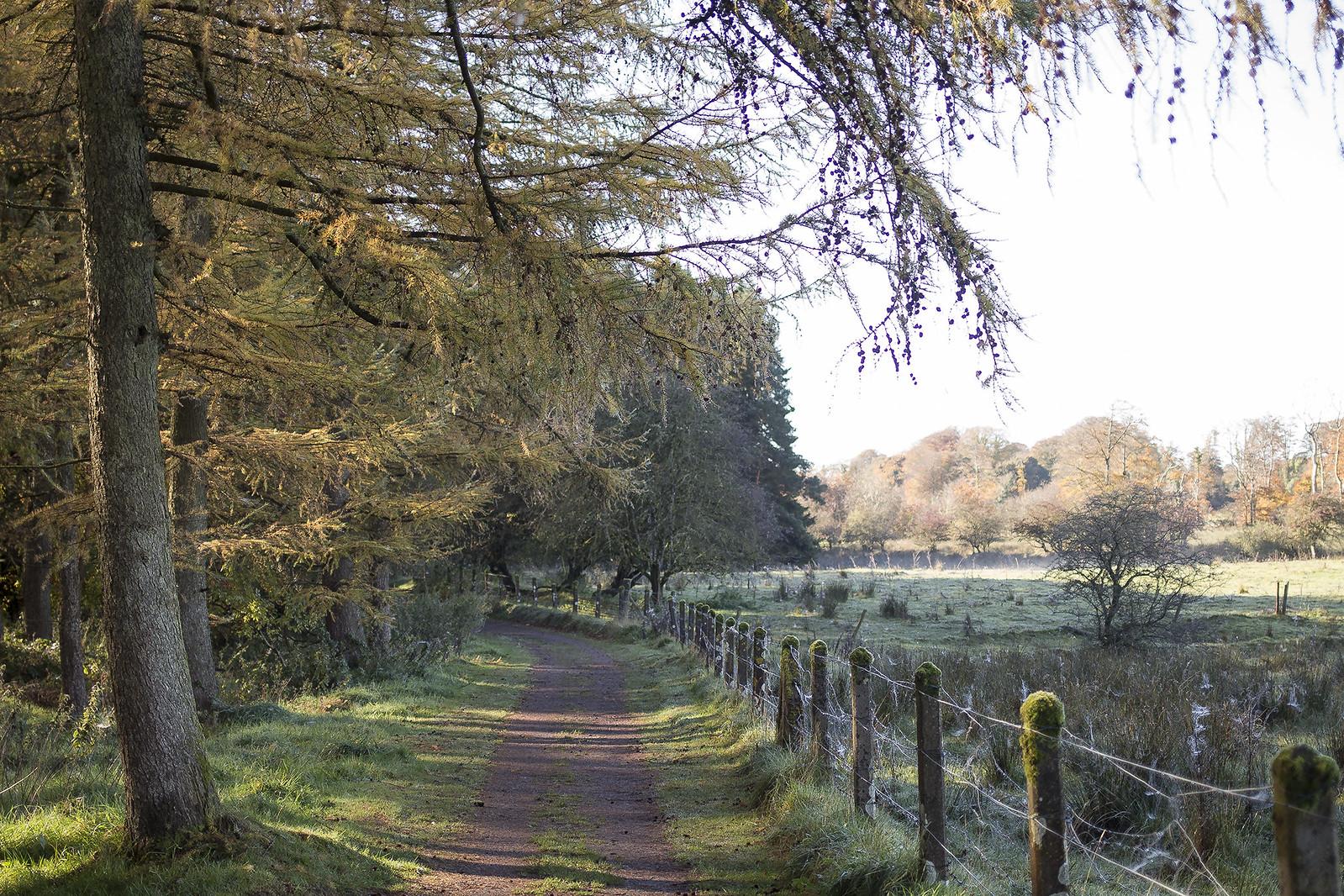 Greenway Walk