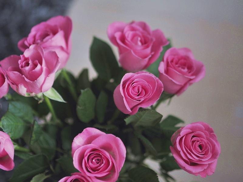 roses ruusut