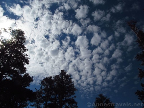 Clouds over the trees along the lower reaches of the Duck Pass Trail in Inyo National Forest, California