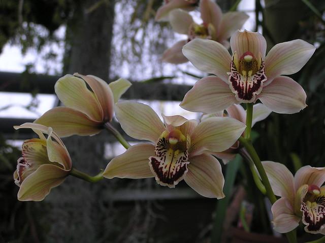 """""""Orhideepäevad"""" Tallinna Botaanikaaed 2018"""