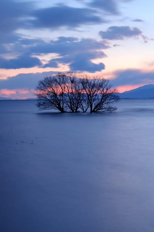 a lake tree