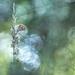Le plumeau..., et le papillon. by SweeP_64